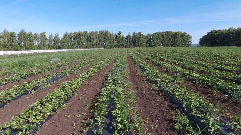 Собственное фермерское хозяйство АПК Столыпино