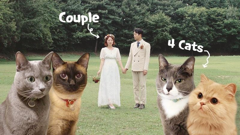 고양이 4마리 키우는 부부의 24시간 관찰 집사부부의 하루 평일편