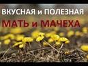 110. Весеннее поедание МАТЬ и МАЧЕХИ, очень полезно и ВКУСНО!