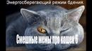 Смешные мемы про кошек 6