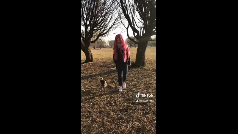 Roxy and pug TikTok