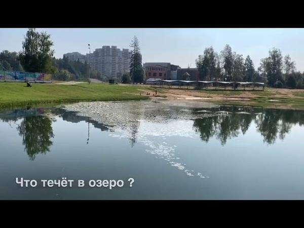 Экологическая катастрофа или что происходит с озером в городском парке города Краснознаменск ?