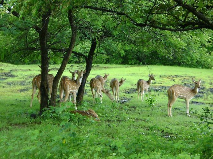 Национальный парк Канха, изображение №2