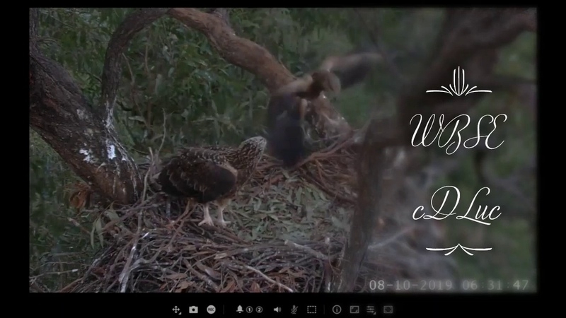 WBSE * SE24 HOVERS BRANCHES!! * SE24 Also Helps SE23 With Branches In Her Talons *