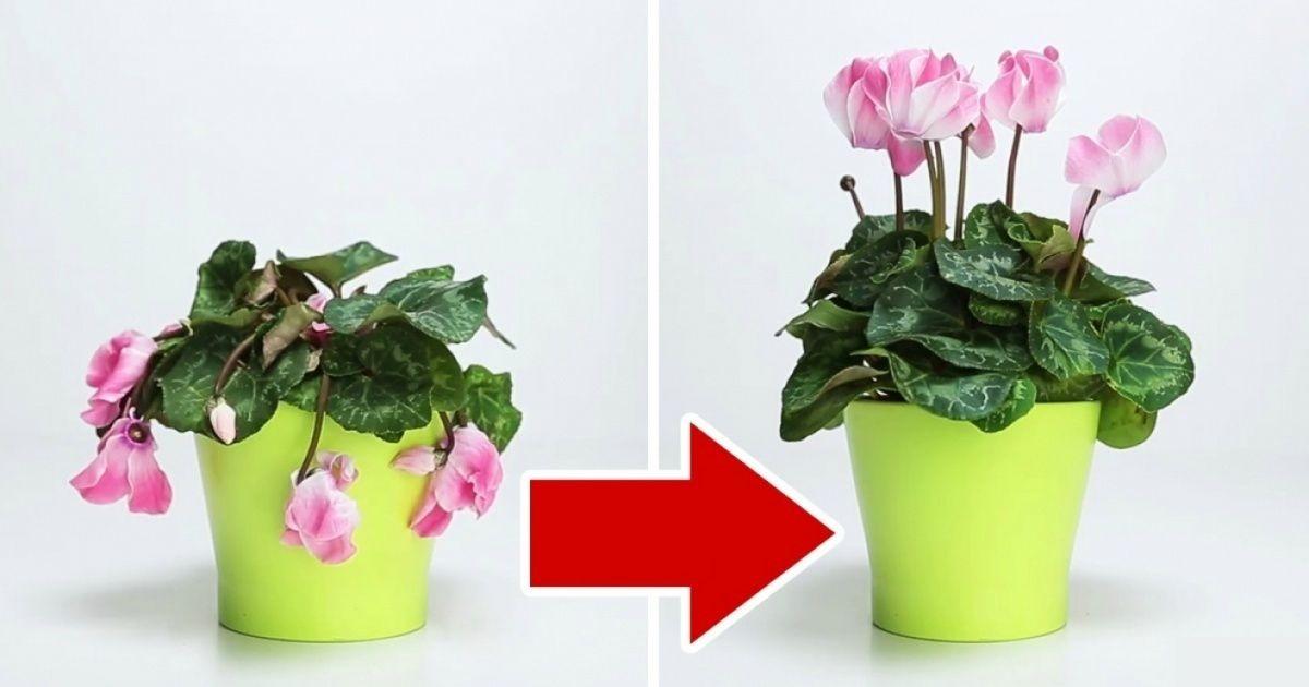 Домашнее средство из 3 ингредиентов спасет даже самый безнадежно загубленный цветок