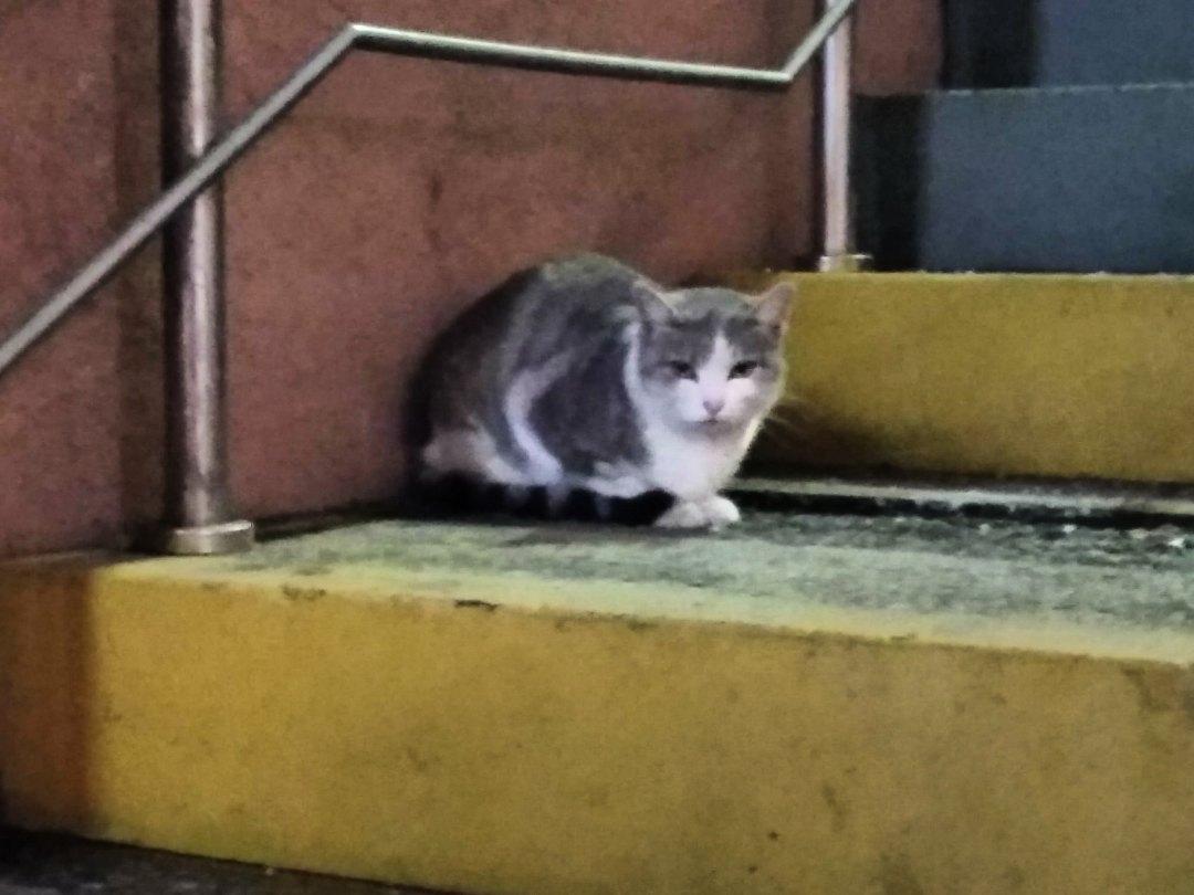 Добрый день. Нужен дом или передержка для котенка....