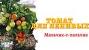 Ранние и неприхотливые томаты для открытого грунта - Сорт Мальчик-с пальчик