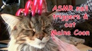 ASMR SOUND NAILS TRIGGER SCRATCHING TAPPING CAT MAINE COON