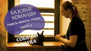 Дрессировка щенка: с чего начать? Учим базовые команды - сидеть, лежать, стоять. Часть 2.
