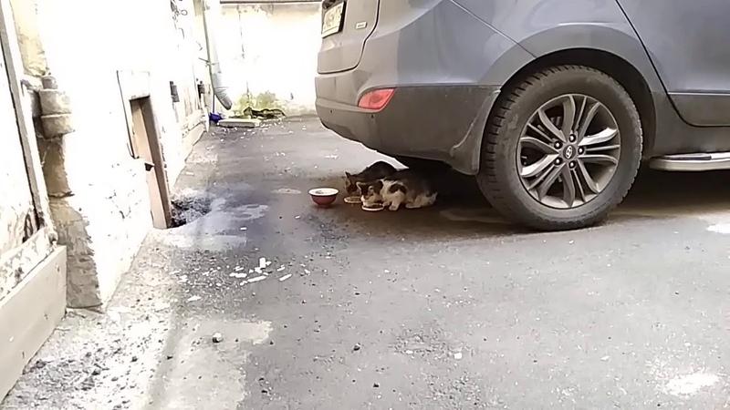 СОС Нужна Передержка Зеленушке кошке худышке Петербург Приют