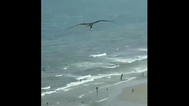 Орёл показывает акуле пляж с высоты птичьего полёта