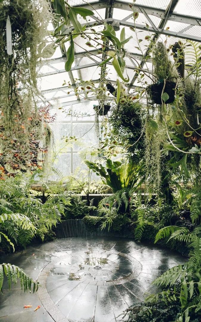 « Glasshouse Greenhouse»