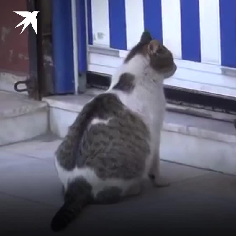 Беременная кошка попросила у людей помощи