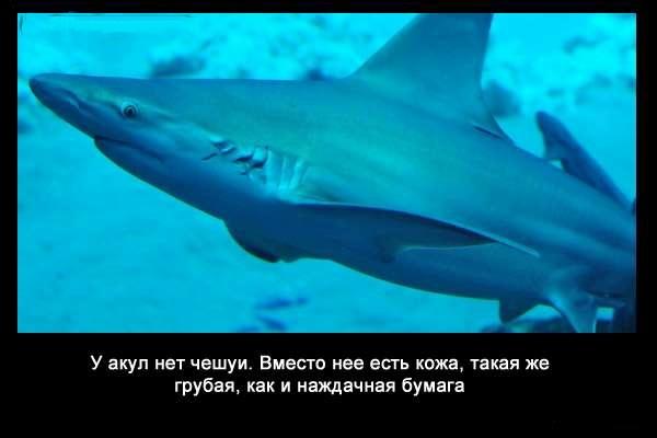 Valteya - Интересные факты о акулах / Хищники морей.(Видео. Фото) - Страница 2 7Aba2cxEEFw