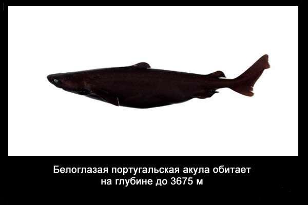 Valteya - Интересные факты о акулах / Хищники морей.(Видео. Фото) - Страница 2 95uinlW99XM