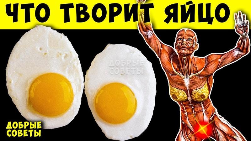 Вот что Будет если Кушать по 2 яйца Каждый день