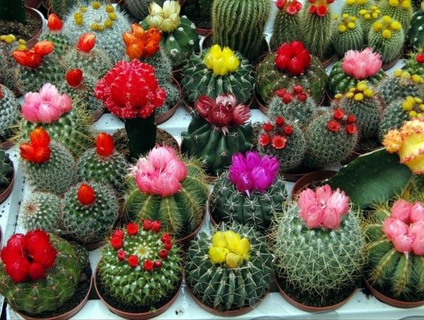 Цветочные хранители благополучия