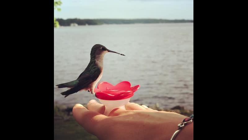 Перстень кормушка для колибри