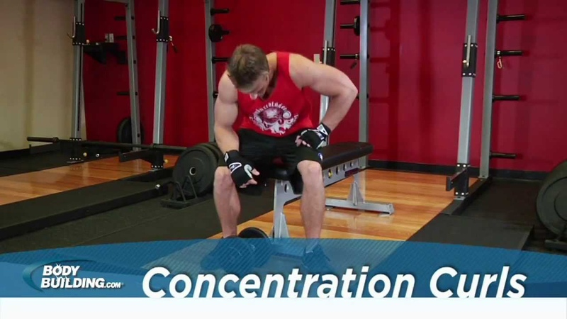 Concentration Curls - Biceps Exercise - Bodybuilding.com