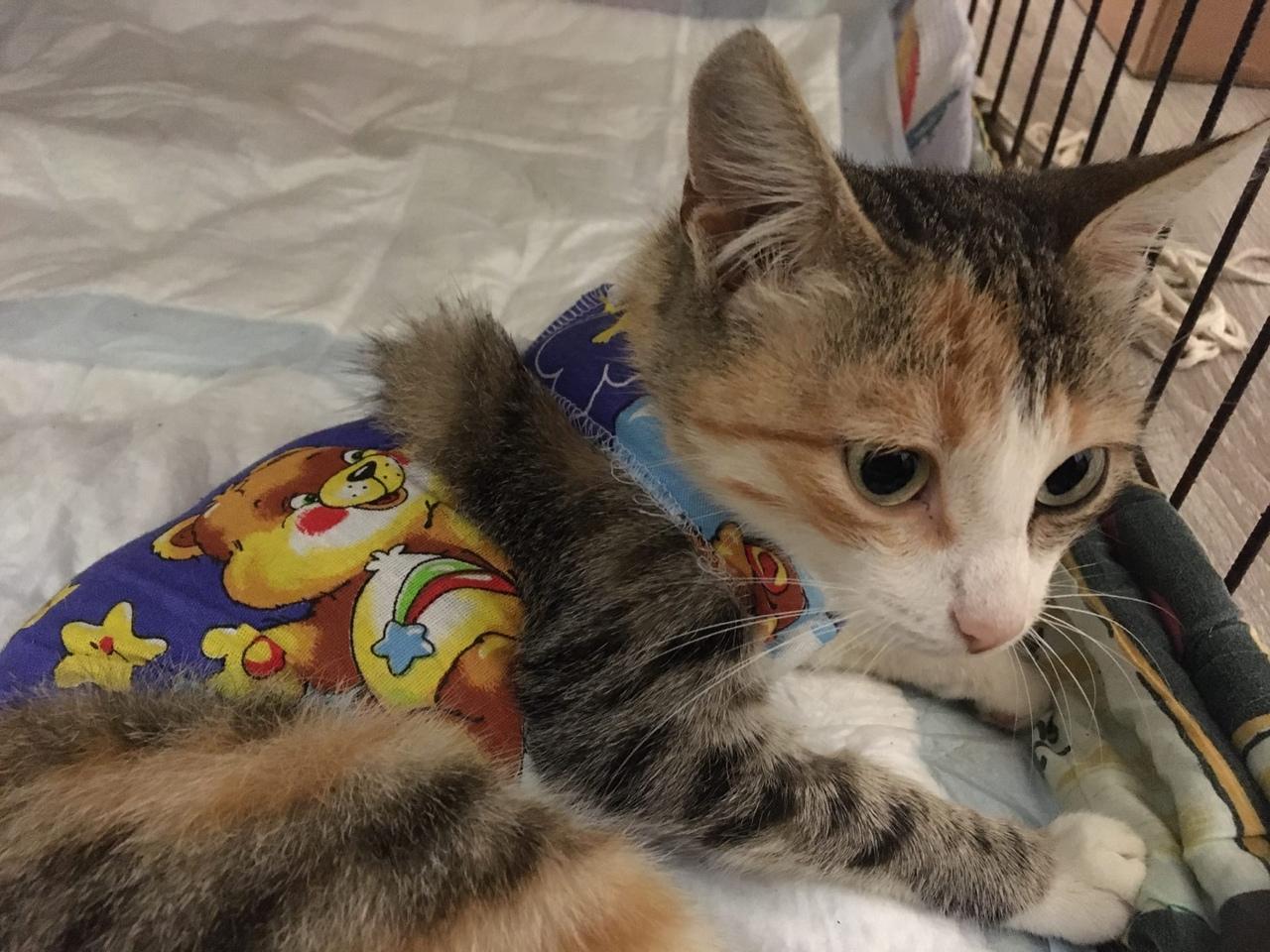23 июля на ул.Индустриальная была выловлена беременная кошечка, всех соседей и б...