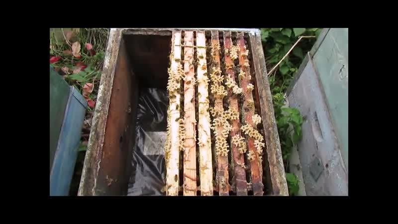 Чем обработать пчел от клеща.