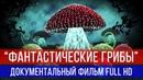 ФАНТАСТИЧЕСКИЕ ГРИБЫ ДОКУМЕНТАЛЬНЫЙ ФИЛЬМ - FULL HD