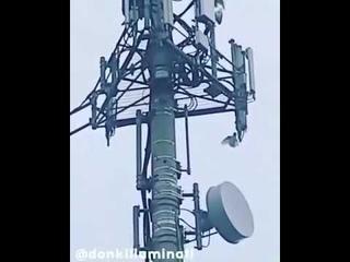 Птицы нападают на антены 5G, которые их убивают!