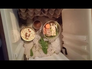кошка и мраморные тараканы
