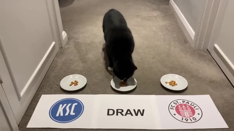Cat of St. Pauli (KSC)