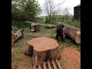 Специализированная бензопила для резки тонких ломтиков ствола дерева r/Pikabu