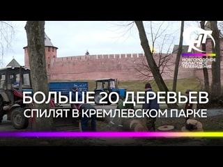 Больше 20 деревьев спилят в Кремлёвском парке