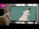 Реклама о поправках конституции - говорящие животные