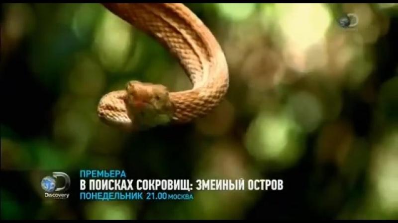 В поисках сокровищ змеиный остров Discovery