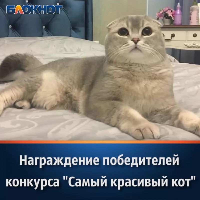 Победители конкурса «Самый красивый кот Волгодонска» получили свои долгожданные призы