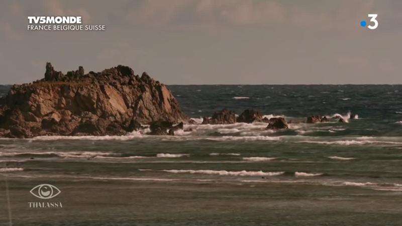 TV5Monde Thalassa 2019 Face aux coleres de la mer (720p) - ArabHD.Net