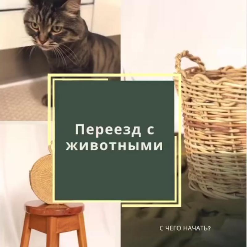 joined_video_645dba4b03624a34a378dfd443eba0aa.MP4