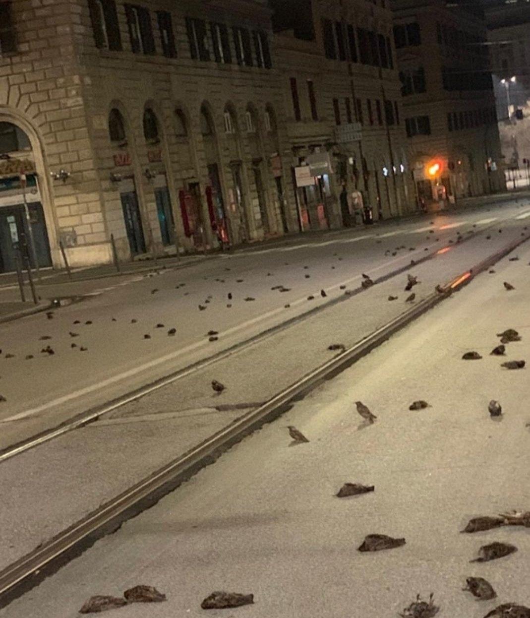 Тысячи птиц погибли в Риме из-за фейерверков