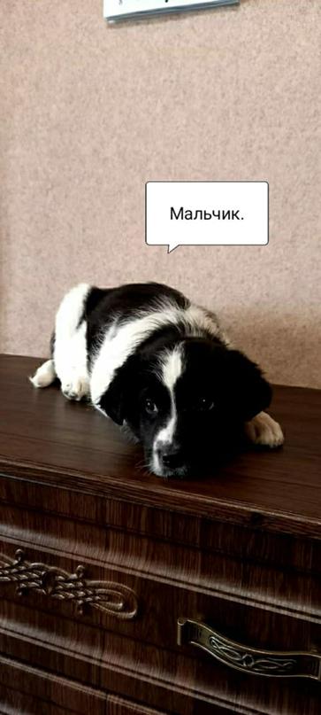 ОРСК!!!НОВОТРОИЦК!!!НАЙДЕНО СЕМЕЙСТВО   Объявления Орска и Новотроицка №13705