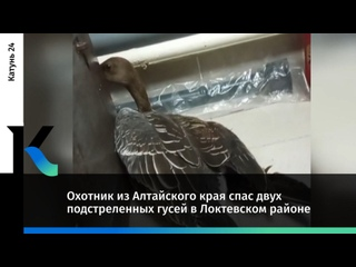 Охотник из Алтайского края спас двух подстреленных...