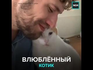 Котик влюблённо смотрит на хозяина — Москва 24
