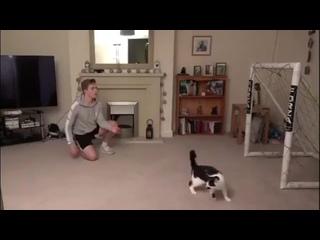 Unbeiavable saves by cat goalkeeper // невероятные сейвы в исполнении Матроскина)