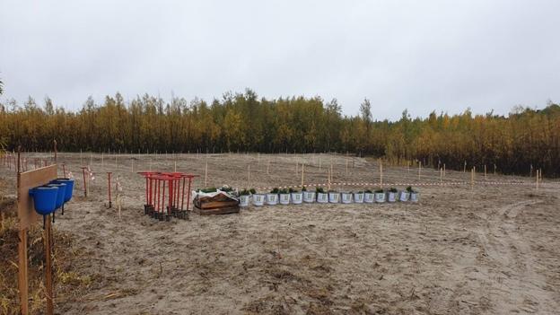 «Сохраним лес» в Югре, изображение №2