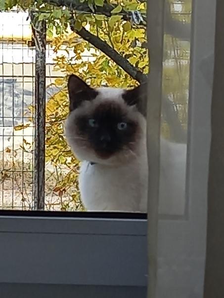 Потерялся кот. Максимус. 23 октября около 6ти вече...