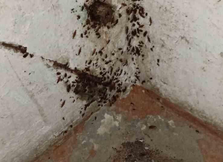 Полчища тараканов оккупировали многоквартирный дом в Миассе