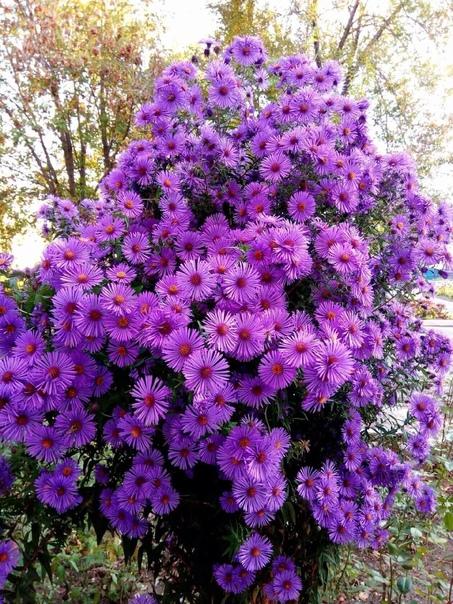 Доброе утро✨А у вас ещё цветут цветы? Делитесь осе...