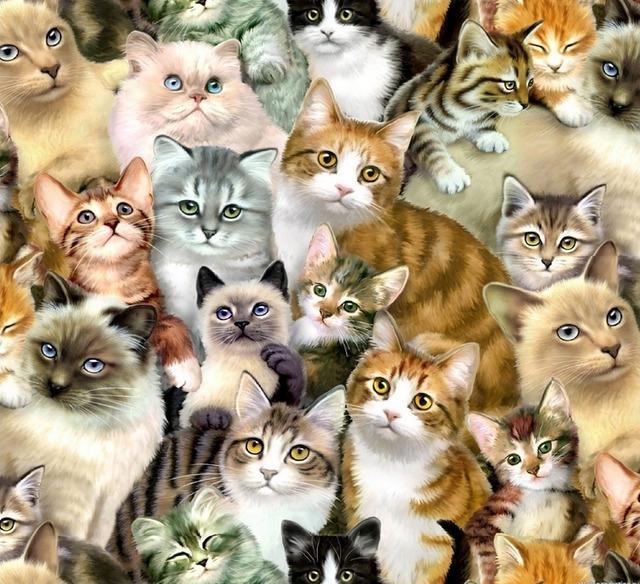 к чему снится кошка или кот,