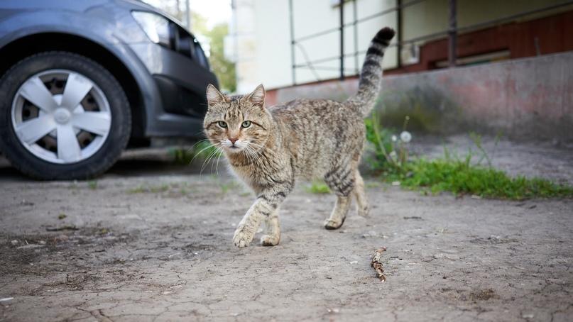 Коты Бориса Панкина GqghGCd026c
