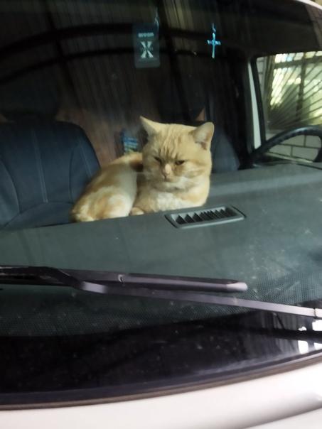Пропал кот в районе Ленинского переезда,ул.Московс...