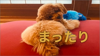 От  -【自宅でのんびりしてるだけ】 Relaxing time at home    #宇野昌磨#フィギュアスケー