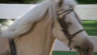 Ride a Wild Pony / Прокатись на диком пони  1975 Австралия, США (рус)